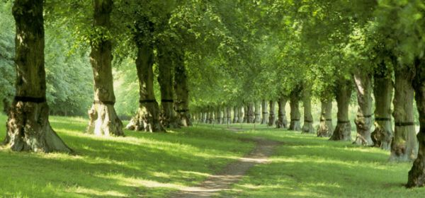 Beautiful countryside at National Trust's Clumber Park, Nottingham, East Midlands