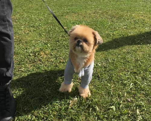 Visiting - The Festival of Food & Drink 2018, National Trust's Clumber Park, Nottingham. - Dogs are welcome